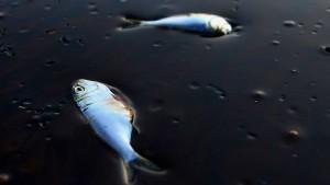 Ölklumpen an der belgischen Küste