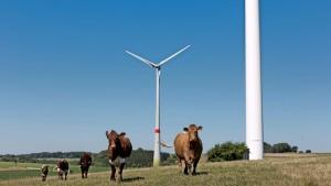 Unterstützen grüne Anlagen die Finanzstabilität?