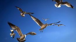 Wo die Vögel freier fliegen