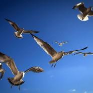 Auch im Vogelreich, weiß der Alte, gibt es Herrscher und Beherrschte.