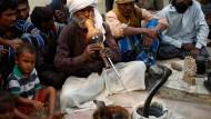 Indiens Schlangenbeschwörer kämpfen um ihre Existenz
