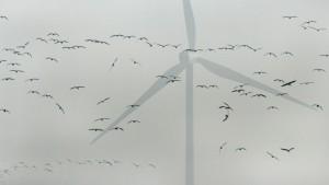 Platzgefahr in der Nähe von Windrädern