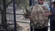 """Die letzten Tiere verlassen den """"schlechtesten Zoo der Welt"""""""