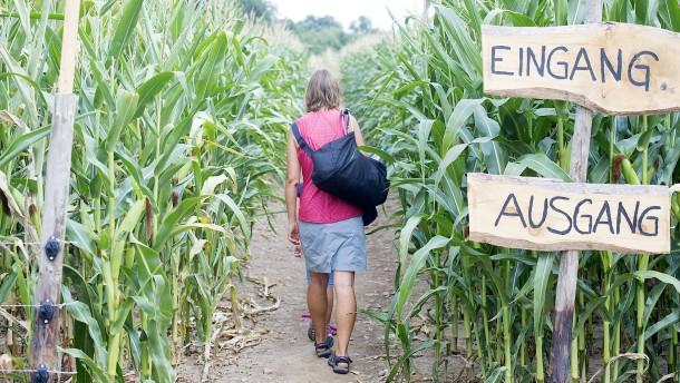 Suchen und finden im Maislabyrinth