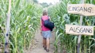 Ein- und Ausgang: Besucher des Maislabyrinths in Rüdesheim drehen sich im Kreis.
