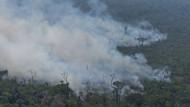 Feuer frisst sich durch den Dschungel bei Porto Velho in Brasilien.