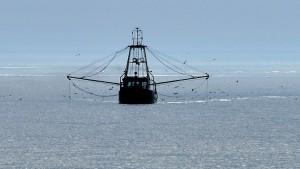 Frischer Fisch auf dem Verhandlungstisch