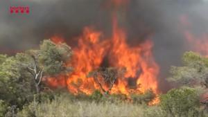 Feuerwehr kämpft gegen Waldbrände in Katalonien