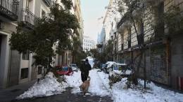 Madrid will 80.000 Bäume fällen