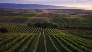 Österreichs beste Weißweine