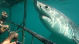 Wo sind die Weißen Haie hin?