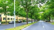 """Danke, Herr Beuys: Die Ludwig-Mond-Straße in Kassel hat durch die Kunst-Aktion """"7000 Eichen"""" ein völlig anderes Gesicht."""