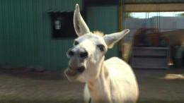 Singender Esel landet Internet-Hit