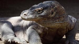 Rote Liste bedrohter Tierarten wird länger
