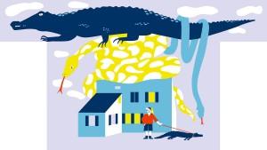 Wohnen mit Alligator