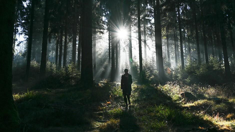 Hauptsache raus! Eine Spaziergängerin ist im Wald am Kleinen Feldberg im Taunus unterwegs.