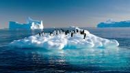 Und mit der nächsten Welle schaffen es auch die Pinguine an den Nordpol.