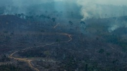G7-Gipfel einigt sich auf Hilfe für Amazonas-Brandgebiete