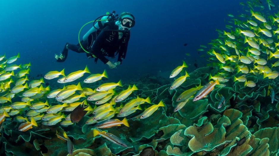 Tauchen – hier vor den Philippinen – konnte sie bereits mit sieben Jahren. Heute verzichtet Alexandra Cousteau meist lieber darauf, weil sie den Anblick toter Meeresböden nicht erträgt.