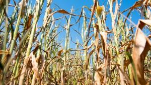 Landwirtschaft im Zeichen des Klimawandels