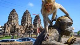 Affen kapern Stadt in Thailand