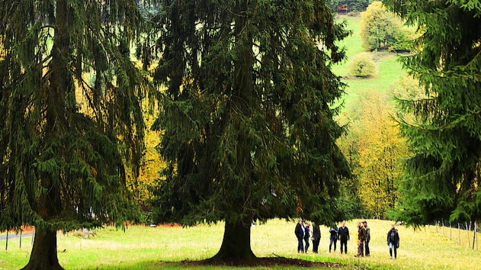 Oh Tannenbaum: Die Fichte, die zur Weihnachtszeit auf dem Frankfurter Römerberg stehen soll, stammt aus dem Wildpark in Bad Orb.