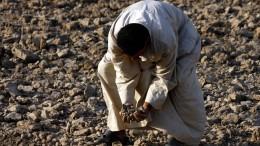 Daran verzweifeln die Bauern im Irak