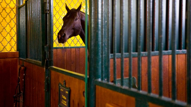 Pferdefleiß macht flexibel