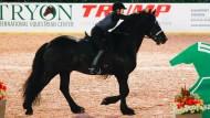 Frederik der Große ist ein Pferd der Superlative