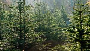 Waldsterben im Wohnzimmer?