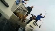 Seelöwen werden in die Freiheit entlassen