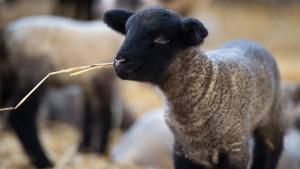 Iss dein Haustier oder werde Vegetarier