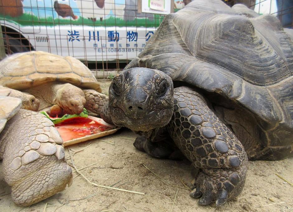"""Abhu ist zurück! Vorher gab es """"ein Problem mit der Schildkröte"""" – aber welches?"""