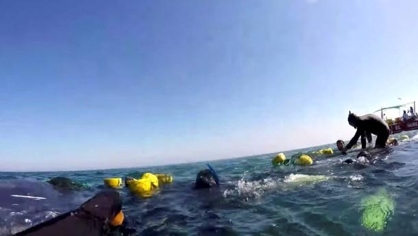 Wal an der Küste Perus gerettet