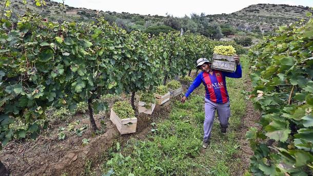 Bolivianischer Wein aus 2000 Meter Höhe