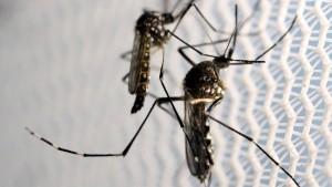 Zikavirus erreicht Amerika