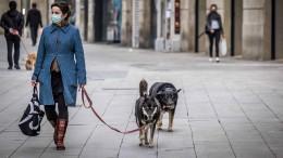 Hund zu vermieten