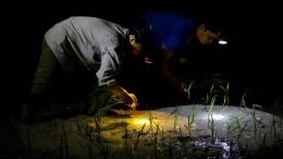 Reisbauern in Vietnam arbeiten jetzt nachts