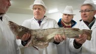 How much is the fish? Premierminister Boris Johnson