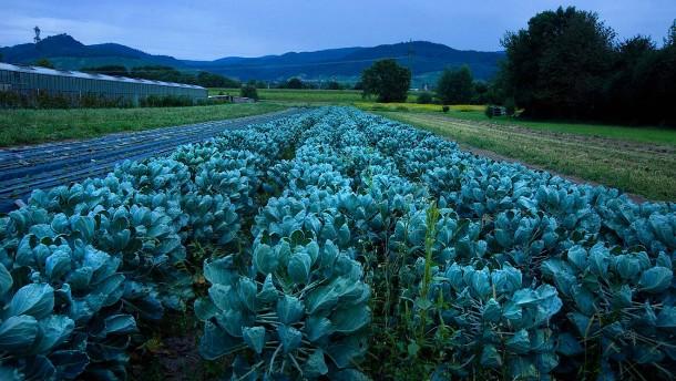 Gift im Gemüsefeld