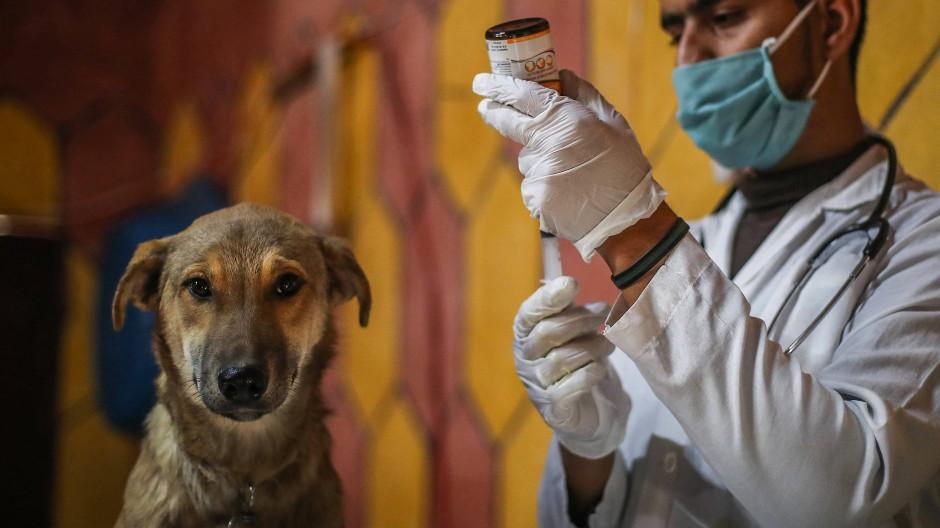 Im Gegensatz zur Humanmedizin sind viele Leistungen beim Tierarzt privat zu bezahlen. Dies macht die Vetirinärmedizin zu einem lukrativen Bereich.