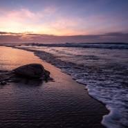 Eine Meeresschildkröte kriecht im mexikanischen Oaxaca über den Strand zum Meer (Symbolbild).