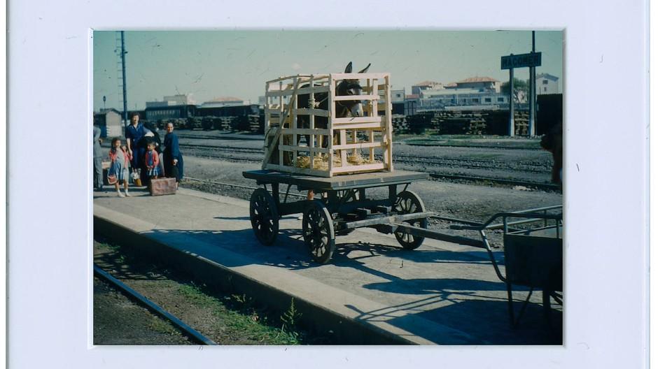 Eines der frühesten Dias: Der Packesel Kleopatra wird 1957 auf Sardinien für die Bahnfahrt präpariert.