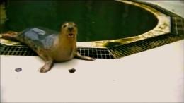 Seehunde können singen