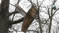 Blechteile, die zu einem Baumhaus gehörten, hängen hoch in einem Baum im Hambacher Forst.