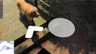 Hund folgt Streetview-Fotografen