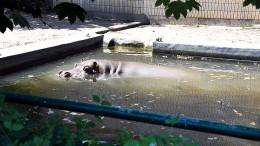 Das geht auf keine Nilpferdhaut