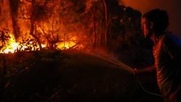 Kampf gegen Waldbrände dauert an