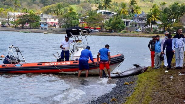 27 tote Delfine auf Mauritius angespült
