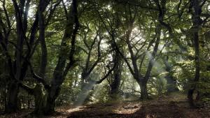 Streit um mehr Naturschutz im Wald
